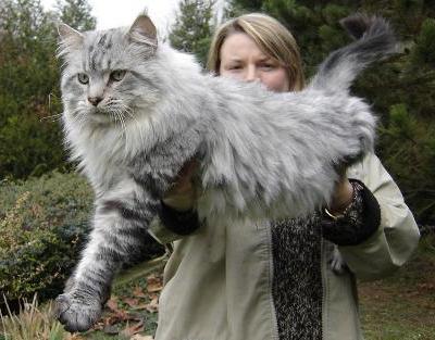 Briciole Di Pensieri Farfugliamenti Il Gatto Gigante Ma Buono Il