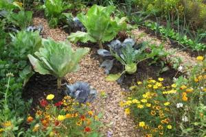 come-coltivare-un-piccolo-orto-in-giardino_1b2b7920df2f04a41b14b52db6d2d294